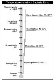 Gambar suhu optimum pertumbuhan mikroba