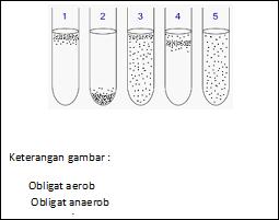 Gambar 1. kondisi pertumbuhan mikroba secara aerob dan anaerobik dalam